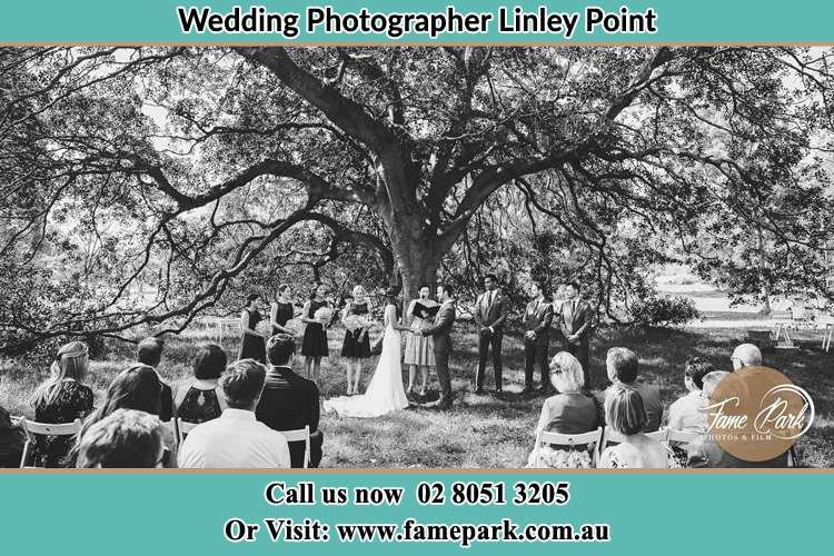Wedding ceremony under the big tree photo Linley Point NSW 2066