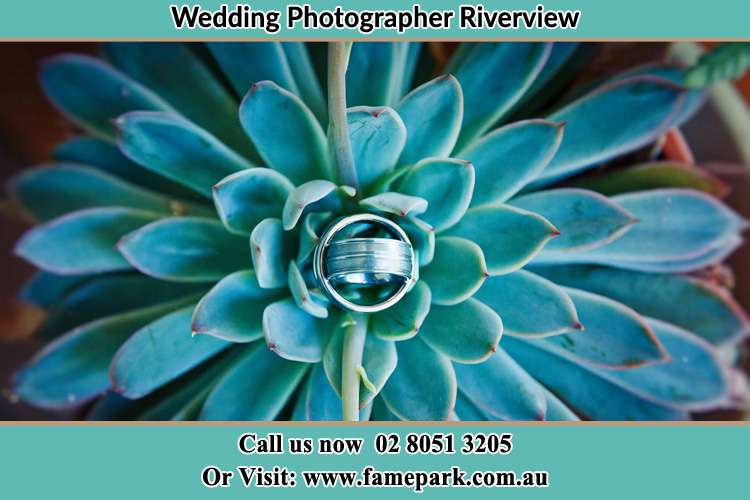 Photo of the wedding ring design at the top of the plant Riverview NSW 2066